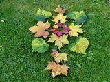 Der Herbst im Gras