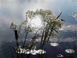 Sonne im Teich
