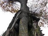 es wächst ein Baum im Baum