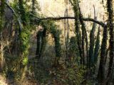 Urwaldig