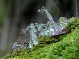 Eisblume an steinerner Rinne