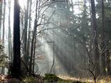 Flutlicht im Mönchswald