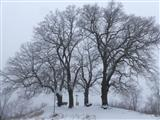 Lindengruppe am Schloss Spielberg im Schneenebel