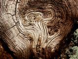Es gibt sie doch - Alien im Holz