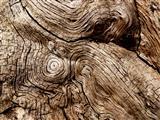 Wirbelstürme im Holz