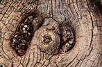 Struktur im Holz