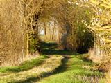 Frühling am Goetheweg bei Weidenbach