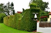 Grüne Altmühlwellen mit Gesicht in Großenried