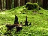 am Waldboden