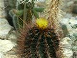 Blüte im Stachelwald