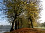 Buchenallee Triesdorf im Herbst