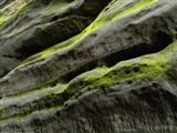 Sandsteinverwitterung und Bewuchs am Pfaffenstein