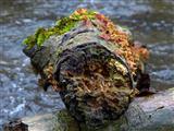 Bruchholz im Bach