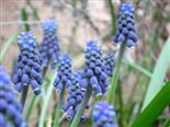 Prachtvolles Blau