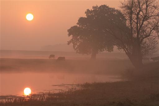Sonnenaufang an der Elbe