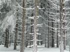 Väterchen Frost regiert im Zauberwald