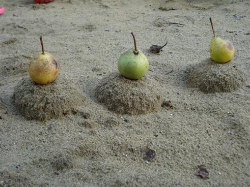 Sandkuchen mit Birne