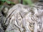 Baumstruktur