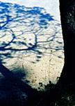 Schattenbaum
