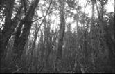 Magellanischer Regenwald