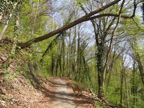 Umgestürzter Baumstamm über Waldweg