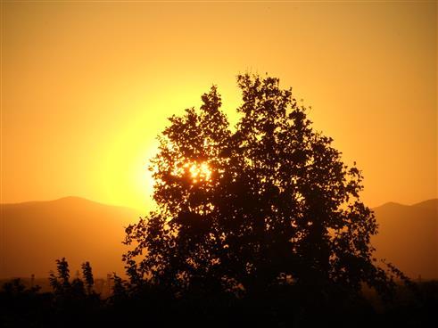 Sonnenuntergang durch einen Baum betrachtet