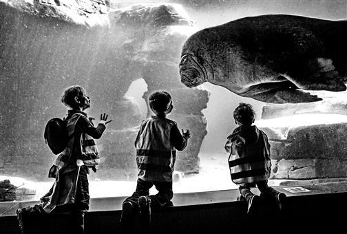 Walroß im Tierpark Hagenbeck