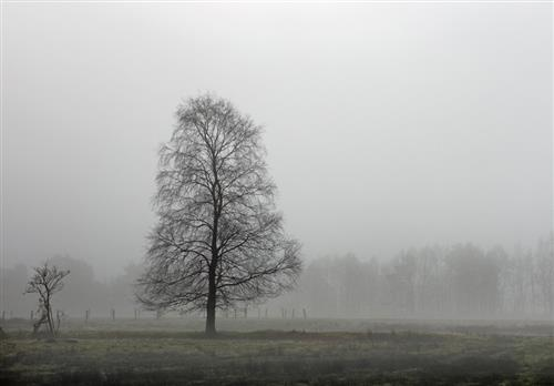 Nebel im Pietzmoor
