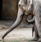 Elefanten mit Jungtier im Tierpark Hagenbeck