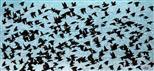 Vogelschwarm (Stare)