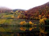 Herbst an der Mosel 2