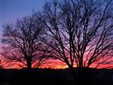 Zwei Winterbäume mit Abendhimmel