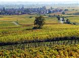 Mitten in den Weinfeldern