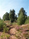 Kleiner Heideweg
