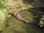 Otter-Leon-Prowo09