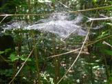 Spinnennetz-Stefan-Prowo09