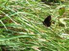 Schmetterling-Rumä-Prowo09