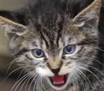 Katze im Zorn