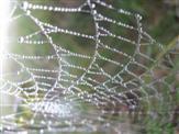 Rechenschieber oder Spinnennetz
