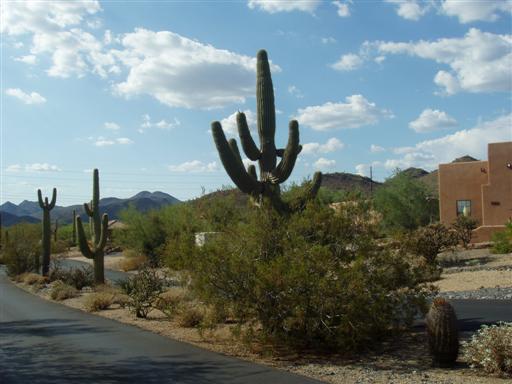 Saguaros bei Carefree, Arizona