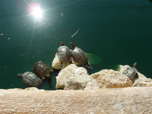 Wasserschildkröten machen Pause