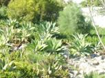 Wildpflanzen im Garten hinter Oasis of Hope Hospital