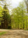 Frühling im Taunus