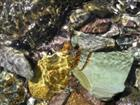 Steine im Bergbach / 4