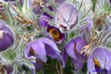 Blumenwirrwarr