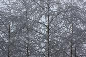 Noch ist es Winter!