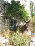 Esel vor der Türe
