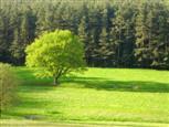 ein deutscher Baum