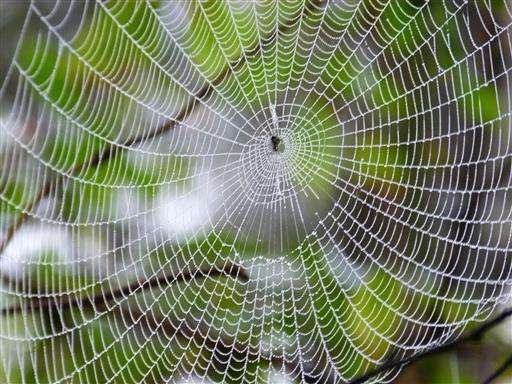 Schönes Netz