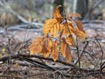 Reste vom letzten Herbst
